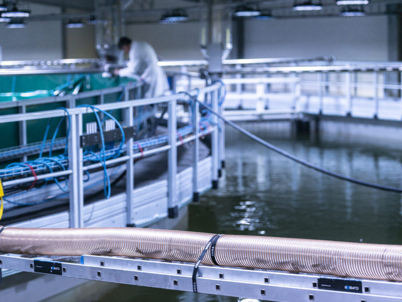 First smolt delivered to Fredrikstad Seafoods, Norway's first land-based salmon farm